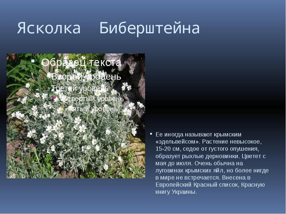 Ясколка Биберштейна Ее иногда называют крымским «эдельвейсом». Растение невыс...
