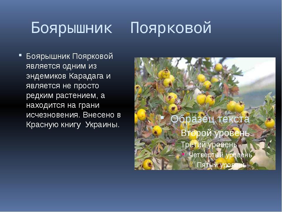 Боярышник Поярковой Боярышник Поярковой является одним из эндемиков Карадага...