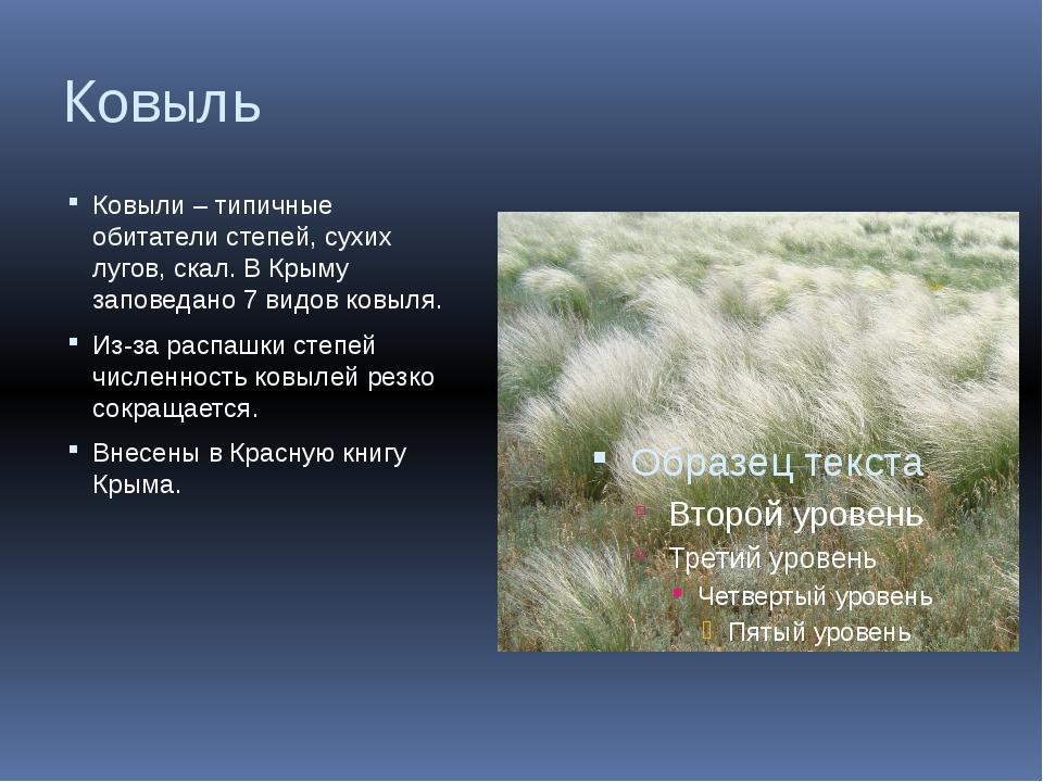 Ковыль Ковыли – типичные обитатели степей, сухих лугов, скал. В Крыму заповед...