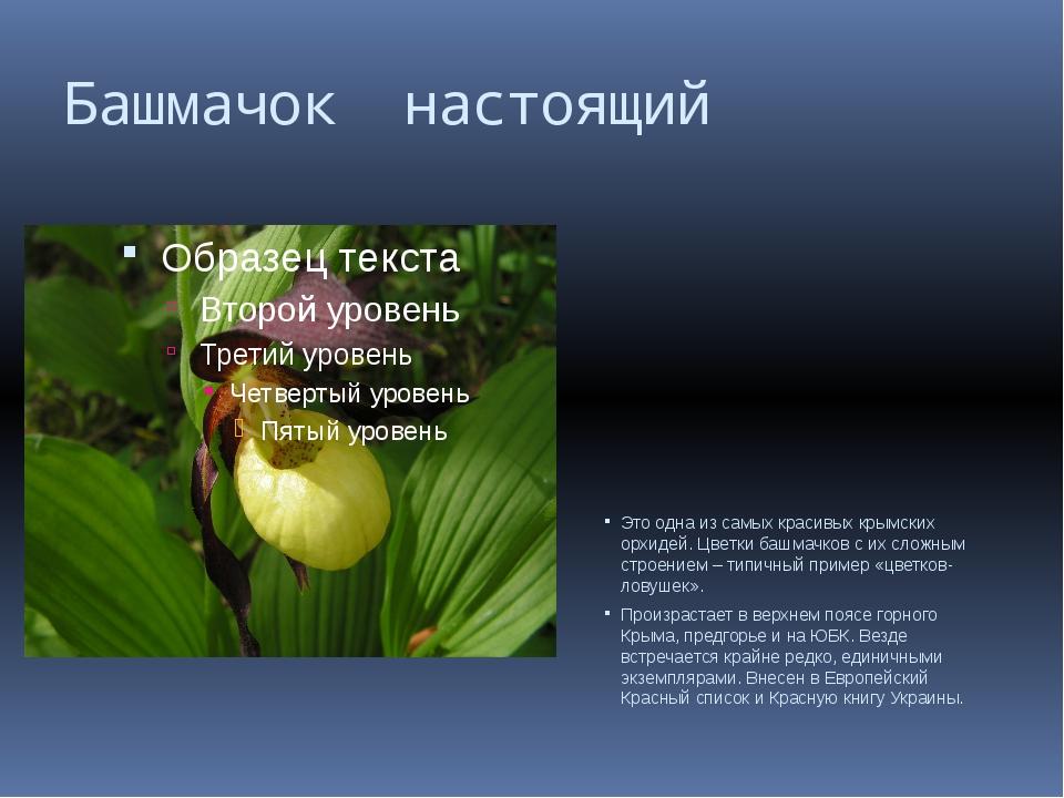 Башмачок настоящий Это одна из самых красивых крымских орхидей. Цветки башмач...