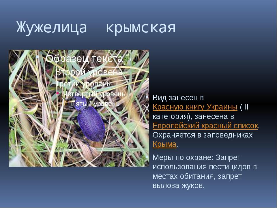 Жужелица крымская Вид занесен в Красную книгу Украины (III категория), занесе...