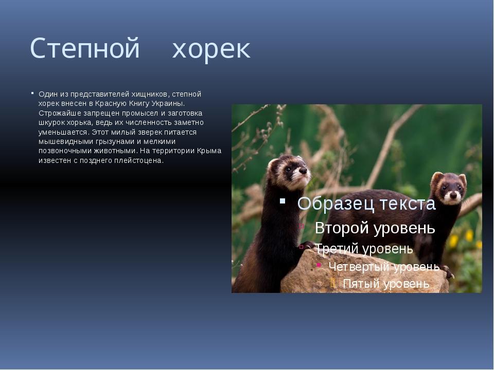 Степной хорек Один из представителей хищников, степной хорек внесен в Красную...