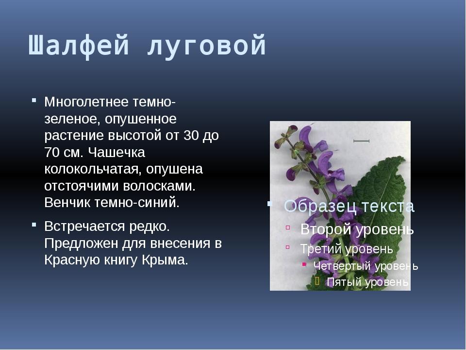 Шалфей луговой Многолетнее темно-зеленое, опушенное растение высотой от 30 до...