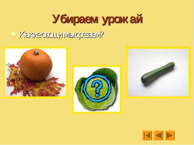 Убираем урожай Какие овощи мы срезаем?