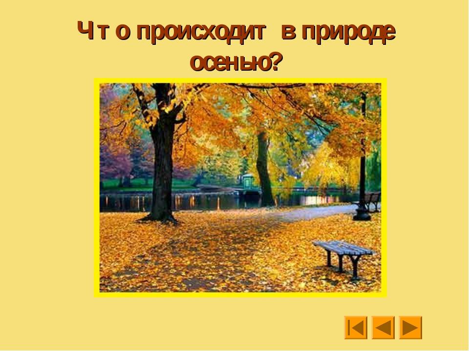 Что происходит в природе осенью?