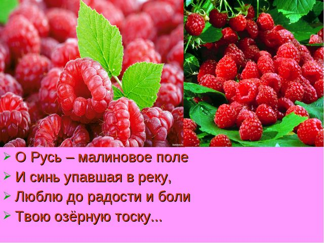 О Русь – малиновое поле И синь упавшая в реку, Люблю до радости и боли Твою о...