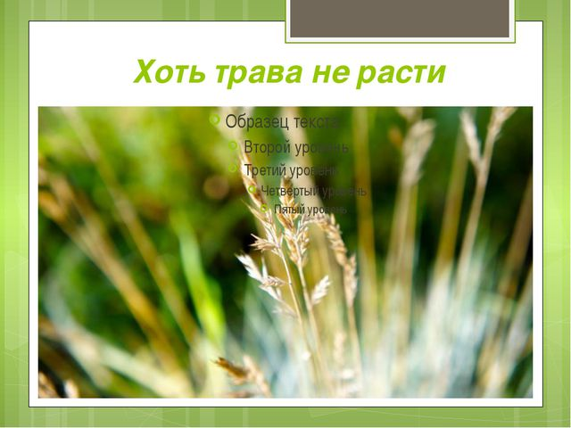 Хоть трава не расти