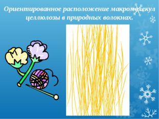 Ориентированное расположение макромолекул целлюлозы в природных волокнах.