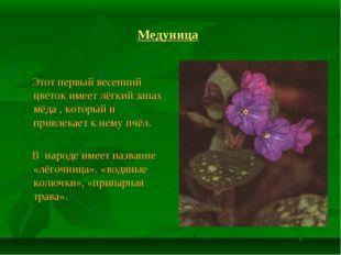 Медуница Этот первый весенний цветок имеет лёгкий запах мёда , который и прив
