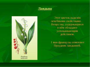 Ландыш Этот цветок наделён лечебными свойствами . Вещества, содержащиеся в нё