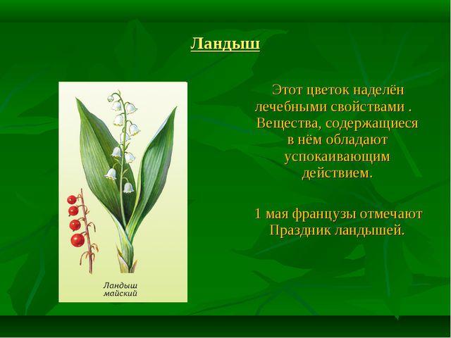 Ландыш Этот цветок наделён лечебными свойствами . Вещества, содержащиеся в нё...