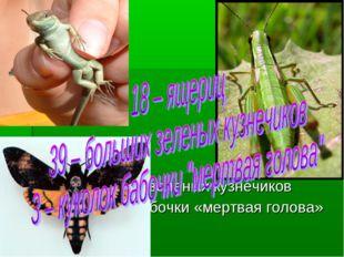 18 – ящериц 39 – больших зеленых кузнечиков 3 – куколок бабочки «мертвая гол