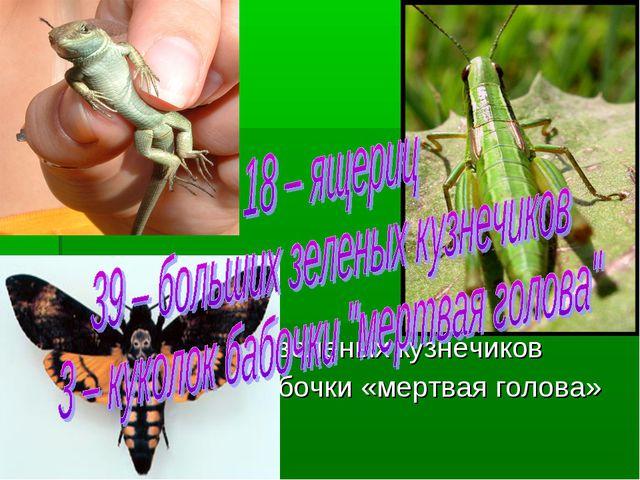 18 – ящериц 39 – больших зеленых кузнечиков 3 – куколок бабочки «мертвая гол...