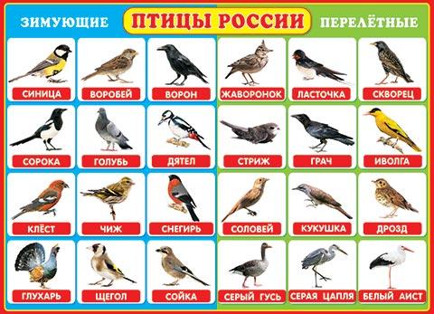 http://www.mir-otkrytok.com/i/images-src/0-02/000/0-02-291.jpg