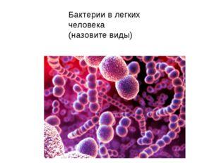 Бактерии в легких человека (назовите виды)