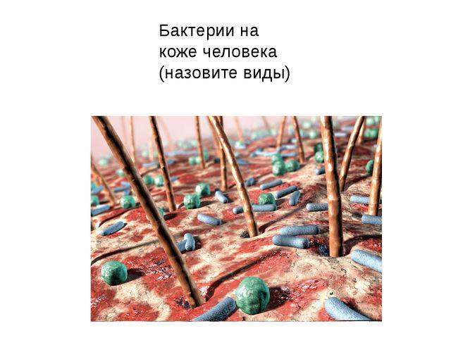 Бактерии на коже человека (назовите виды)