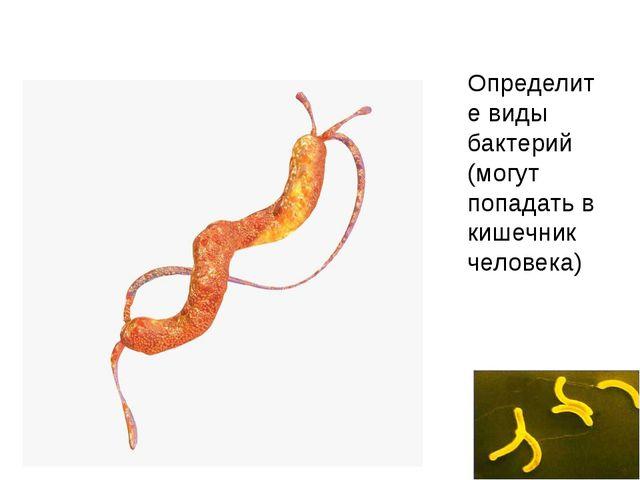 Определите виды бактерий (могут попадать в кишечник человека)