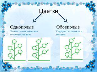 Цветки Однополые Только тычиночные или только пестичные Обоеполые Содержат и