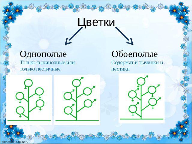 Цветки Однополые Только тычиночные или только пестичные Обоеполые Содержат и...