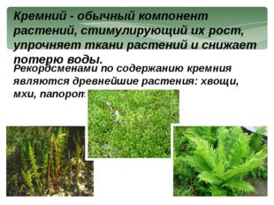 Кремний - обычный компонент растений, стимулирующий их рост, упрочняет ткани
