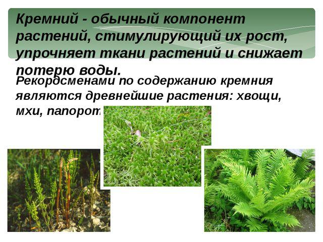 Кремний - обычный компонент растений, стимулирующий их рост, упрочняет ткани...