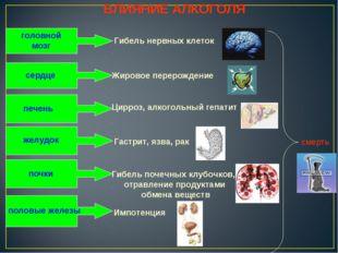 ВЛИЯНИЕ АЛКОГОЛЯ головной мозг Гибель нервных клеток сердце Жировое перерожде