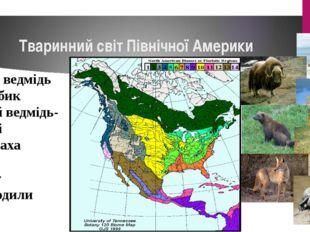 Тваринний світ Північної Америки Білий ведмідь Вівцебик Бурий ведмідь-гризлі