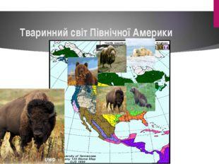 Тваринний світ Північної Америки