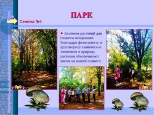 Стоянка №6 ПАРК  Значение растений для планеты неоценимо. Благодаря фотосинт
