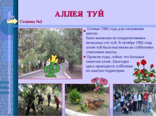 Стоянка №2 АЛЛЕЯ ТУЙ Осенью 1982 года для озеленения школы было выписано из п