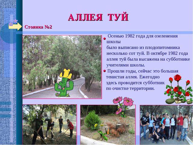 Стоянка №2 АЛЛЕЯ ТУЙ Осенью 1982 года для озеленения школы было выписано из п...