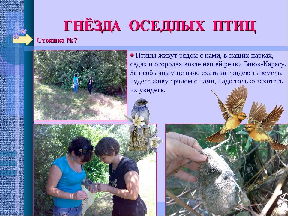 Стоянка №7 ГНЁЗДА ОСЕДЛЫХ ПТИЦ Птицы живут рядом с нами, в наших парках, сада...