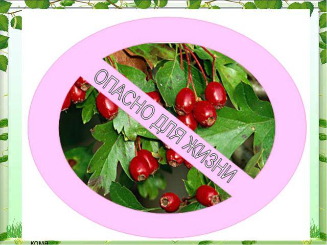 Волчье лыко При употреблении ягод возникает резкое жжение во рту, затем отёк...