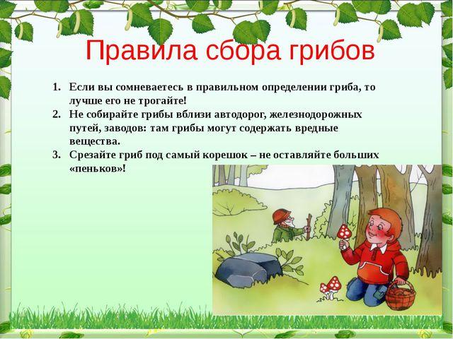 Правила сбора грибов Если вы сомневаетесь в правильном определении гриба, то...