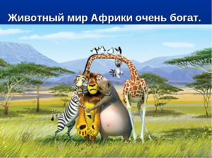 Животный мир Африки очень богат.