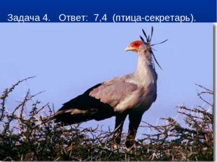 Задача 4. Ответ: 7,4 (птица-секретарь).