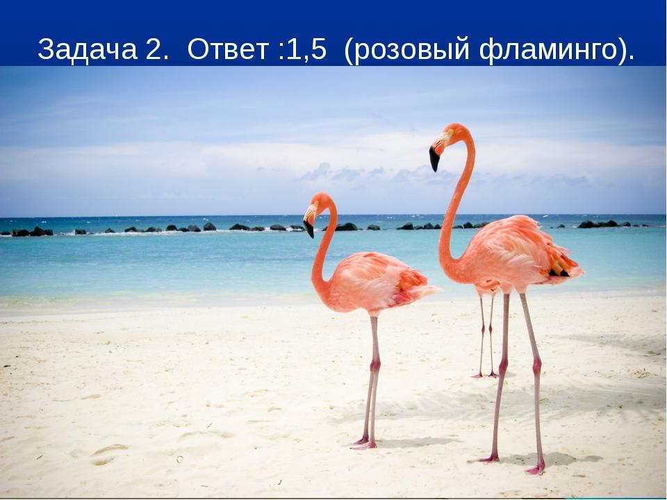 Задача 2. Ответ :1,5 (розовый фламинго).