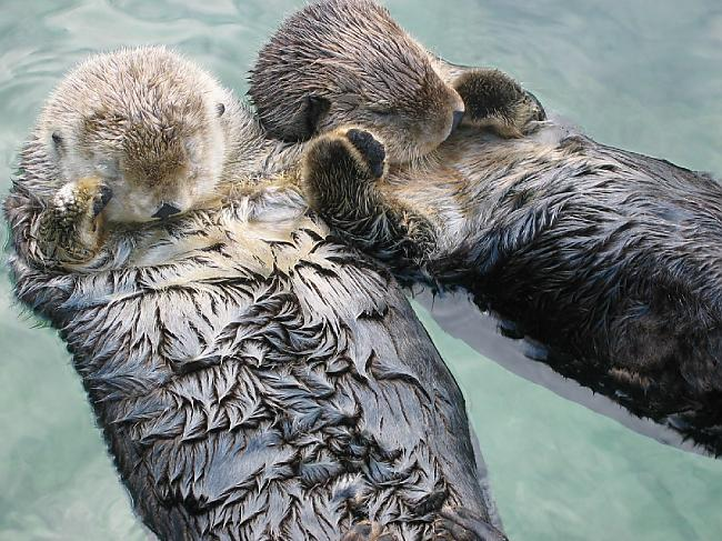 Beavers Holding Hands