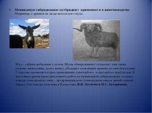 Межвидовую гибридизацию (аутбридинг) применяют и в животноводстве. Например,