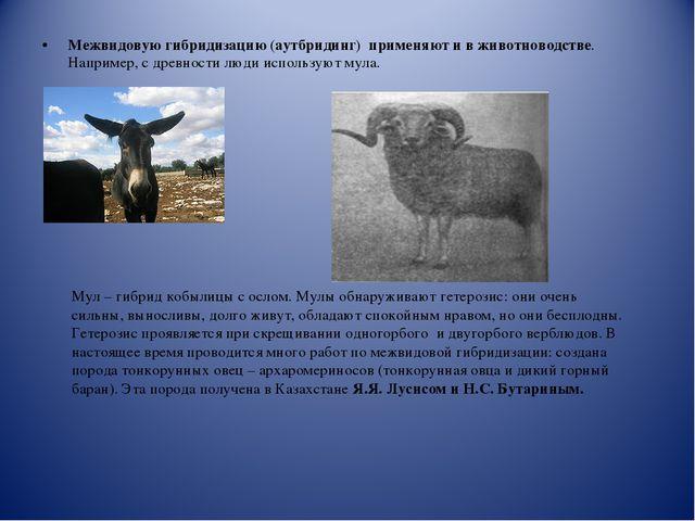 Межвидовую гибридизацию (аутбридинг) применяют и в животноводстве. Например,...