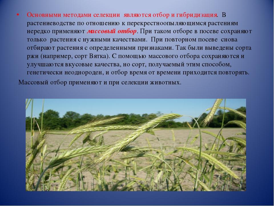Основными методами селекции являются отбор и гибридизация. В растениеводстве...