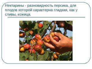 Нектарины - разновидность персика, для плодов которой характернагладкая, как