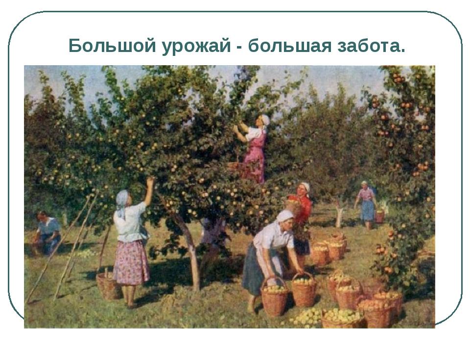 Большой урожай - большая забота.