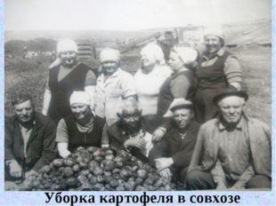 Уборка картофеля в совхозе * Уборка картофеля в совхозе