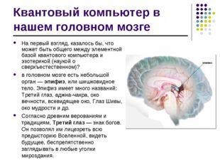 Квантовый компьютер в нашем головном мозге На первый взгляд, казалось бы, что