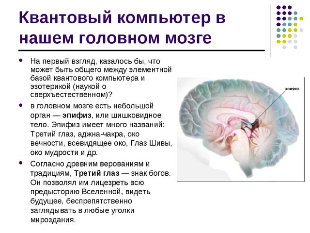 Квантовый компьютер в нашем головном мозге На первый взгляд, казалось бы, что...