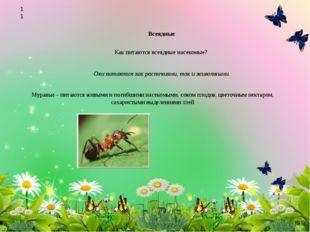 Всеядные Как питаются всеядные насекомые? Они питаются как растениями, так и