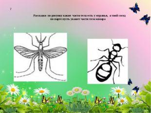 Расскажи по рисунку какие части тела есть у муравья, а твой сосед по парте пу