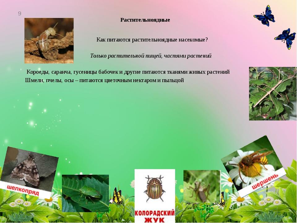 Растительноядные Как питаются растительноядные насекомые? Только растительной...