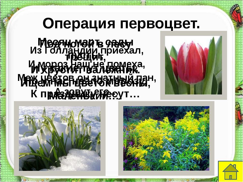 Моя Вообразилия. http://aida.ucoz.ru Мы весенним тёплым днём В зоопарк гулять...